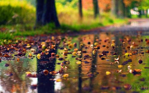 【散文】晚秋的回音