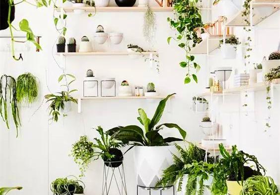 又好看又吸霾的绿植,你家怎么可以没有?