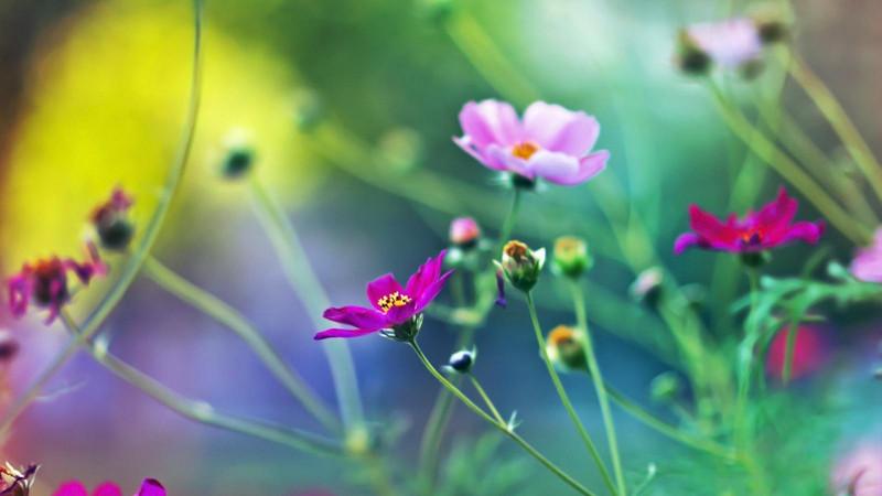 【散文】关于春天